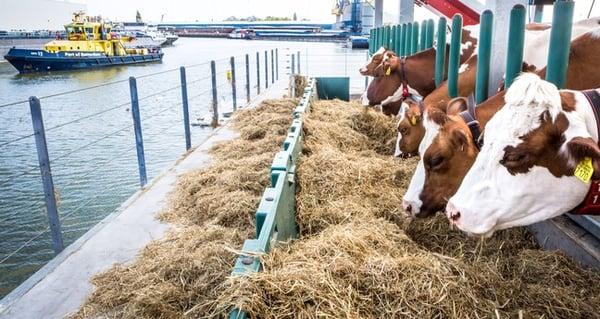 Bron:www.metronieuws.nl floating farm